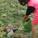 arroser pour faire pousser les plants